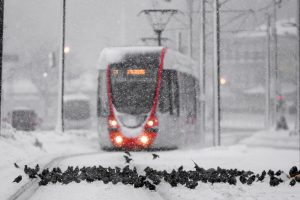 ISTANBUL, TURKEY - JANUARY 07: Seagulls are seen on the ground in front of a tramway moves along the snow covered tramline during the heavy snowfall in Istanbul, Turkey on January 07, 2017. Arif Hüdaverdi Yaman / Anadolu Agency