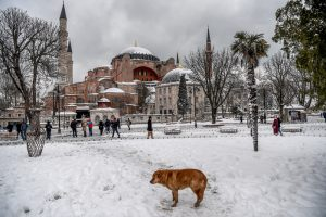 A stray dog stands in front of the Hagia Sophia Museum at the Blue mosque (Sultan Ahmet) district during snowfalls in Istanbul on January 8, 2017. Heavy snow blanketed Istanbul for a second day on January 8, 2017, resulting in the cancellation of hundreds of flights and more disruption for thousands of travellers. The snowfall was forecast to lessen later in the day but unusually cold temperatures, even for the time of year, well below freezing were expected throughout the week / AFP PHOTO / OZAN KOSE